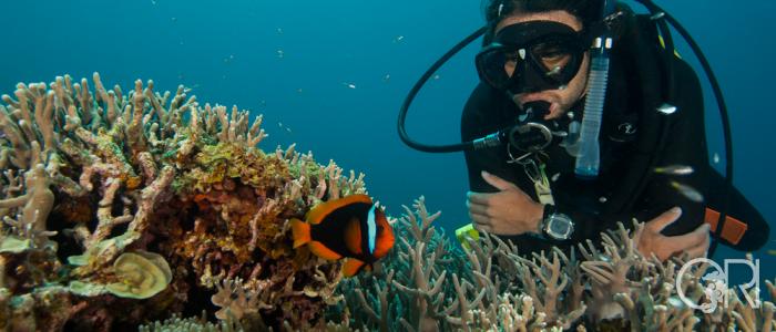 Japan Diving Trip Report