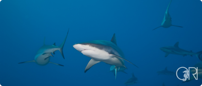 Sharks Demystified (Asian Diver Article)