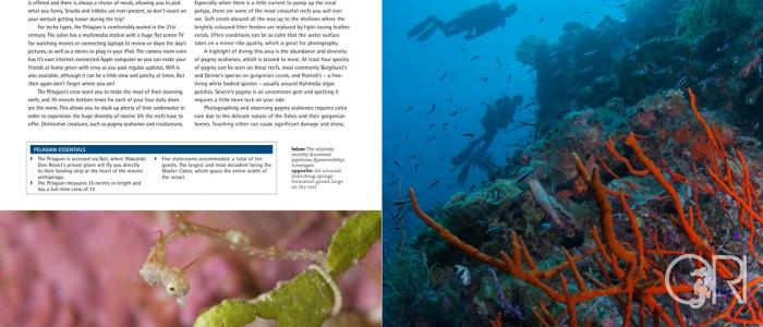 Scuba Diver AustralAsia Magazine- Feature Article