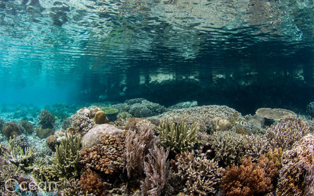 Raja Ampat Conservation Cruise on Dewi Nusantara 2013 (Trip 2)